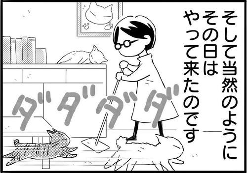網戸に登るネコちゃん