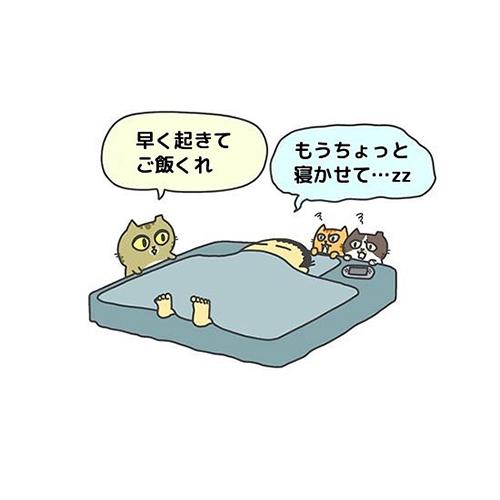猫による飼い主の起こし方1