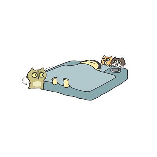 猫による飼い主の起こし方2