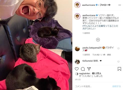 ミキ 亜生 猫 千太郎 保護猫 銀次郎 藤