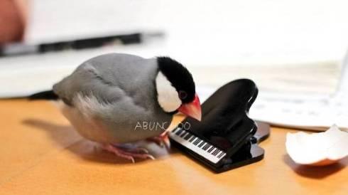 文鳥 モフ ゲーム機を守る