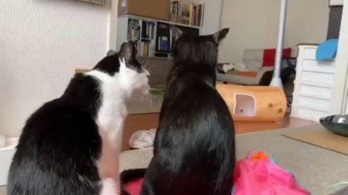 かける君 かんなちゃん 猫 理不尽