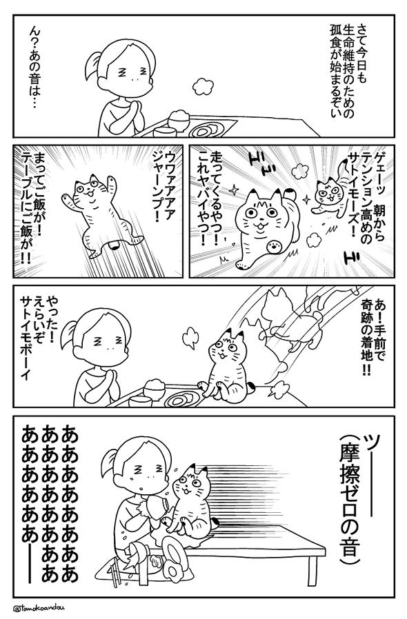 猫と生(い)くる生活