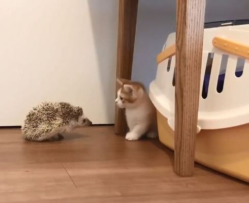 ハリネズミちゃんとネコちゃん