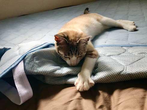 Nクール ニトリ 気持ちいい 猫 うっとり 表情 なみそ