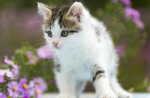 猫のフィラリア予防