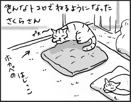 新しい寝床