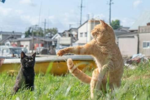 のら猫拳 久方広之 ぽっちゃり猫