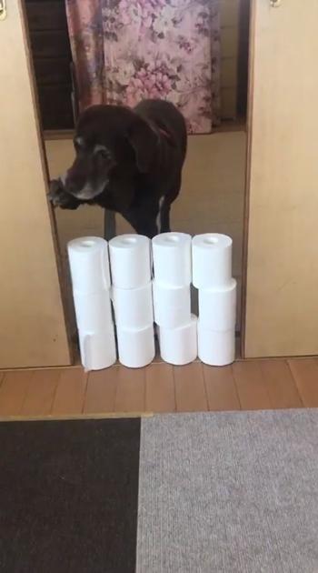 ドアを開けるおばあちゃんワンコ