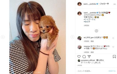 吉田沙保里 トイプードル 犬 相棒 かわいい