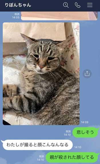 フォロワー 猫 LINE 定期的 悲しそう 嫌そう 表情 顔