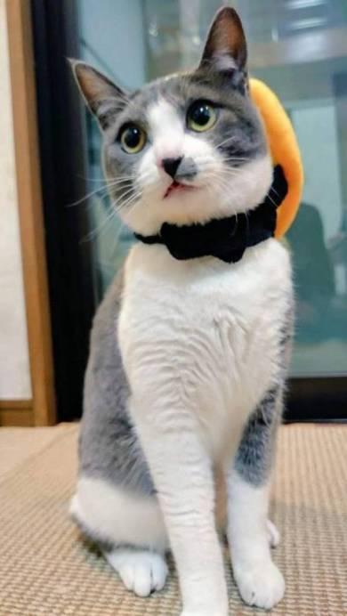 落ちてる猫 つまみ とら くま