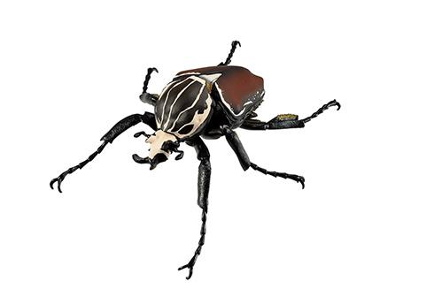 原寸大のヘラクレスオオカブトやギラファノコギリクワガタ 一番くじ最新作から昆虫がテーマのリアルフィギュア登場