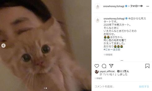 石田ゆり子 猫 ペット ばぶちゃん バンビ 犬