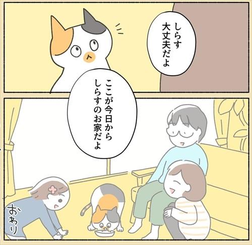 保護猫ちゃんを家に迎えるまでの話