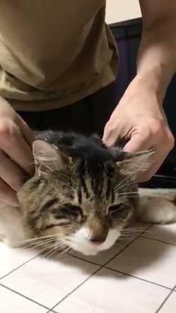 猫 ヤマダ 歌う デフォ 腕 ハグ 抱っこ 甘えん坊