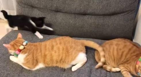 はまる子猫