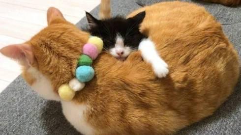仲良し保護猫 うに むぎ はち むー ジャストフィット