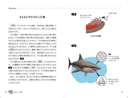 サメ解説2