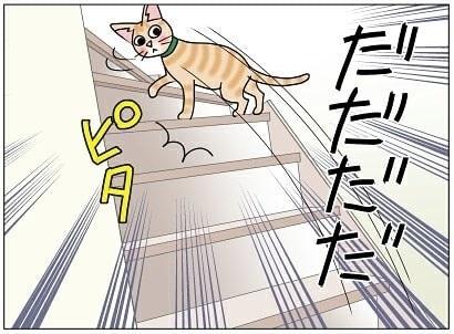 宅配便が怖い猫ちゃん