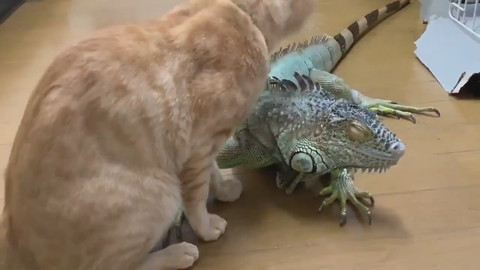 イグアナさんとネコちゃん