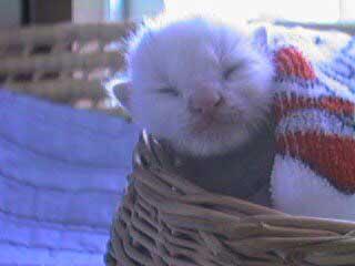 猫 22歳 あめ 保護 ビフォーアフター 貫禄 白猫