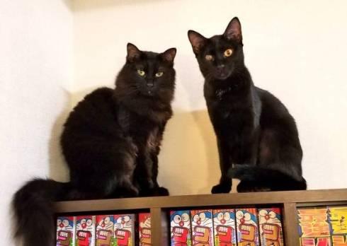 黒猫 立った チャコさん