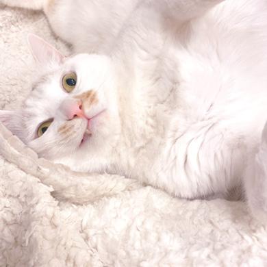 猫 あくび 顔 すごい ノロイ