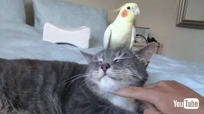 Sits on Top of Cat's Head
