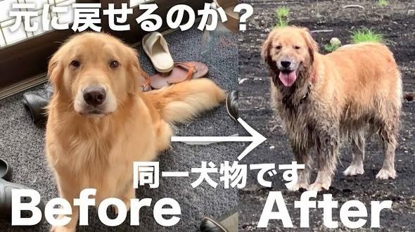 泥水に突っ込む犬