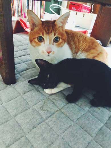 黒猫 子猫 新人ドライバー教育 クロネコヤマト 箱