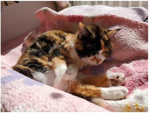 照英 愛猫 シャチ テン 犬 動物