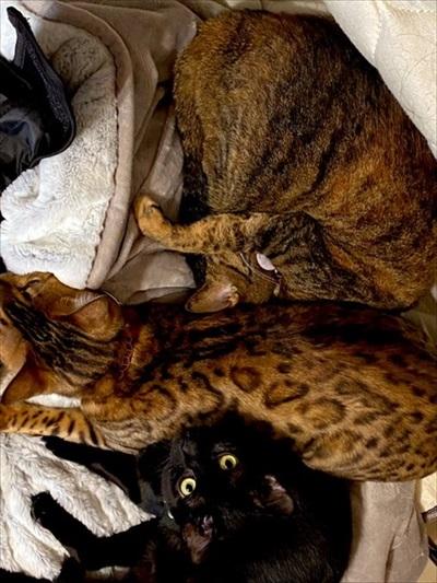 猫のおしっこ臭対策