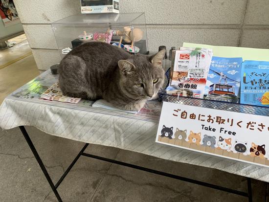 テーブルの上にゃんこ