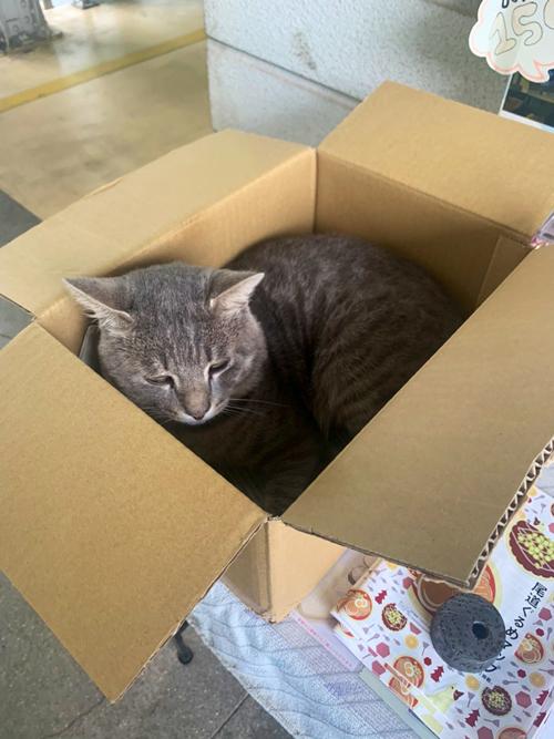 箱を置いてみた