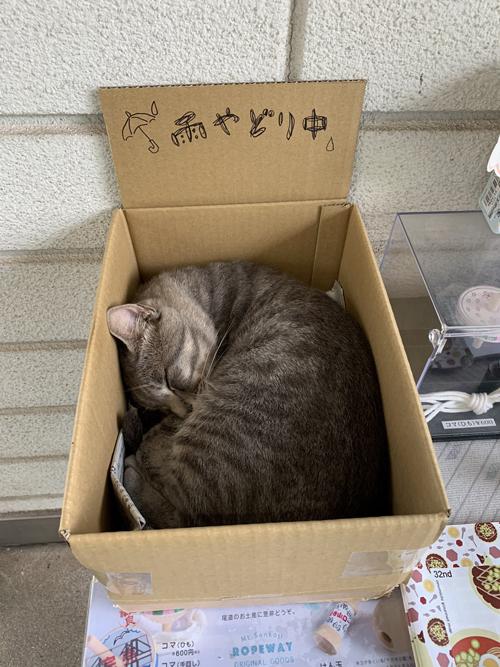 雨宿り中の箱