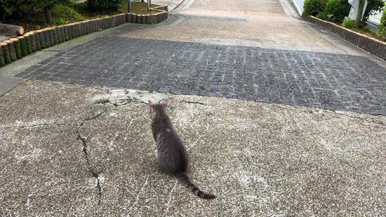 展望台の猫ちゃん