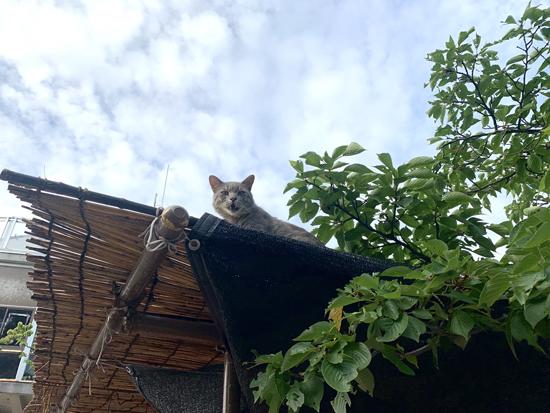 屋根の上から