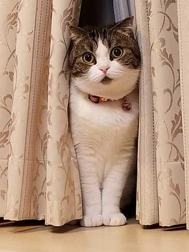 半開きに見える 猫の口 模様
