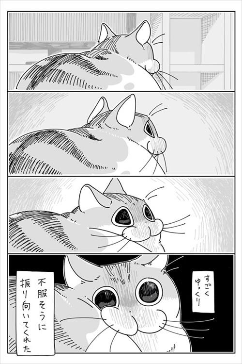 寝てたネコ