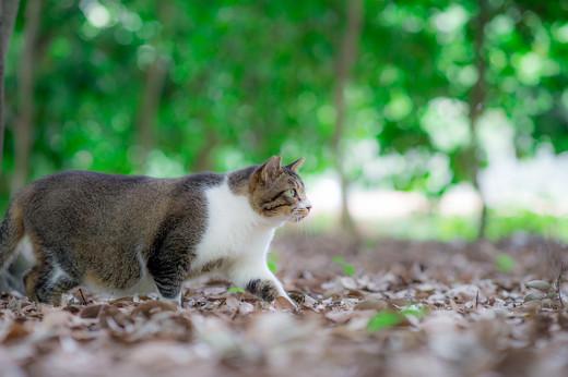 ネコ 熱中症