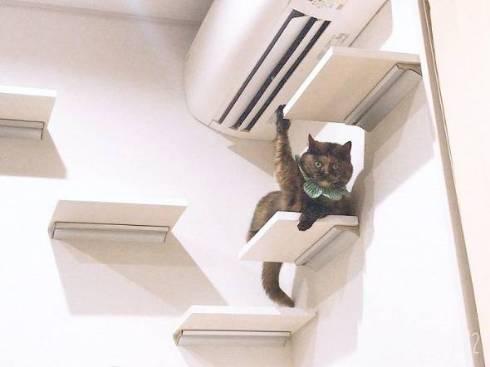 猫 挙手でアピール ジジちゃん
