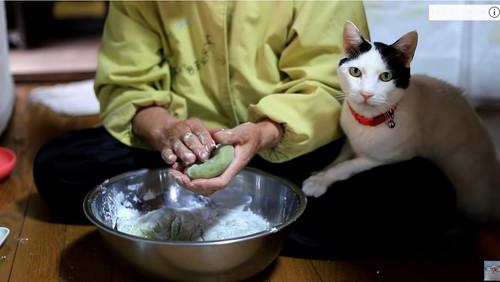 猫と草餅作り