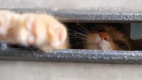 帰宅 猫 玄関 ポスト かわいい 出迎え