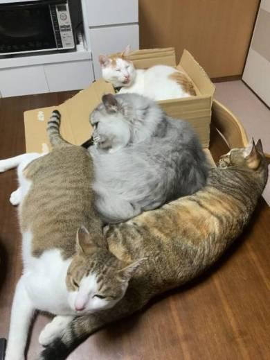猫 絶対なんかいる