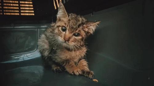 ネココさんとの出会い