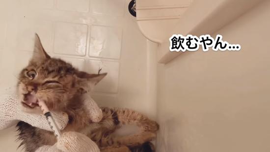 薬を飲むネココさん