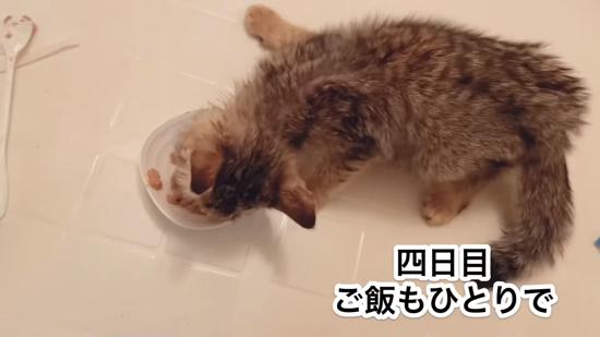 4日目のネココさん