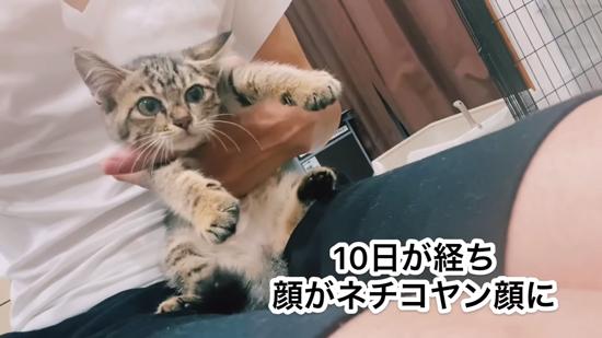 10日目のネココさん