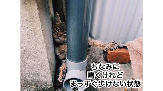 真っすぐ歩けないネココさん